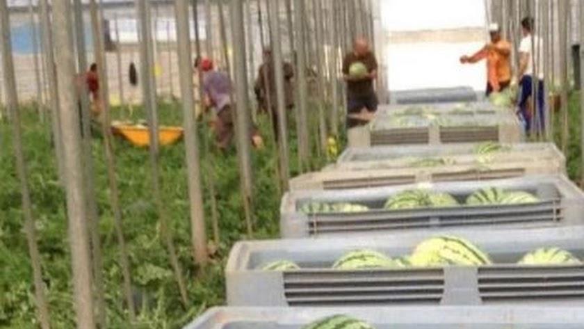 Más de la mitad de los agricultores no se aplican protector solar.