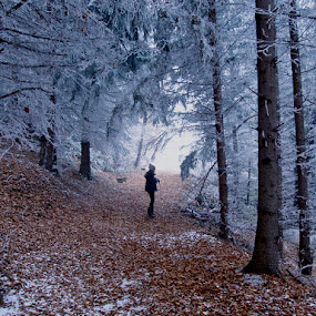 In persuite for the winter by Jadranka Bužimkić - People Fine Art ( jasna winter snow frost white forest way )