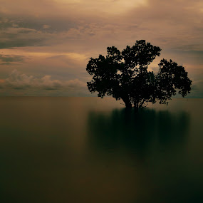 Lonely tree by Wahid Hasyim - Landscapes Sunsets & Sunrises ( tree, sunset, landscape photography, landscapes, landscape, photo, photography, photoshop,  )