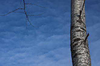 Photo: winter sky