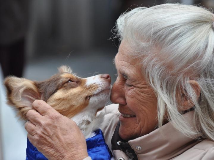 Animals in love di ciubecca