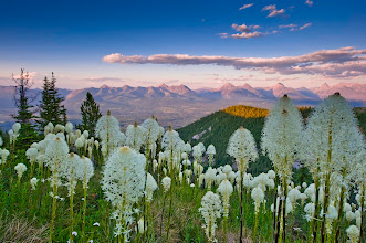 Photo: Bear Grass, Flathead Valley, Mountains of the Flathead and Glacier (to the right) from Mt. Hefty.