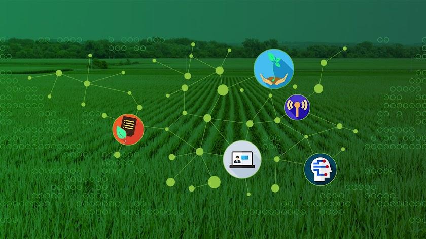 La División de Soluciones Agrícolas de BASF trabaja con agricultores y profesionales del sector agrícola.