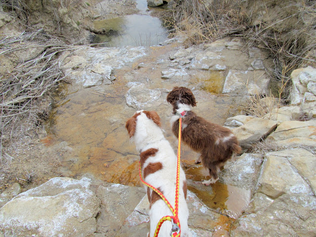 Torrey and Boulder at a spring in Rock Canyon