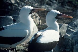 Photo: Española, Galapagos Islands.