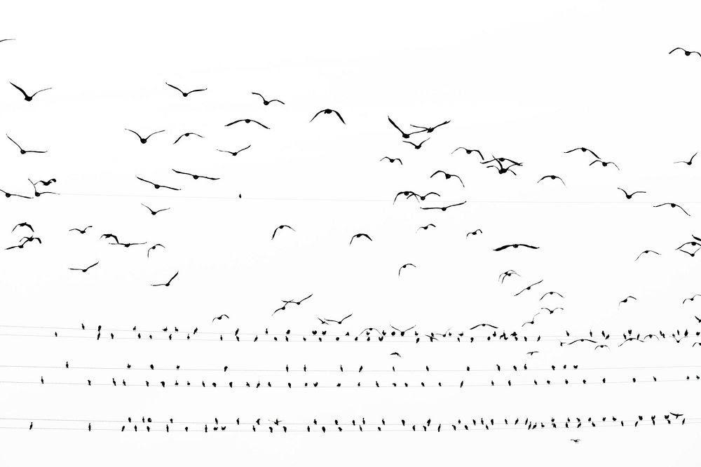 A invasão dos pássaros nas cidades do Japão