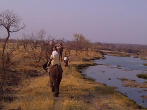 Photo: Trundling off on an elephant-back saafari: http://www.go2africa.com/zambia/victoria-falls/african-safari-guide/elephant-back-safaris