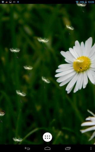 Dandelion Seeds on Screen