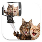 Funny Cat Live Wallpapers