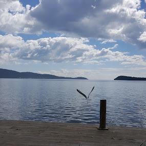 Thunder Bay, ON, Canada by Tameem Sanjar - Animals Birds