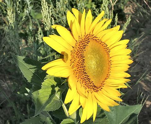 giallo estivo di smpaint