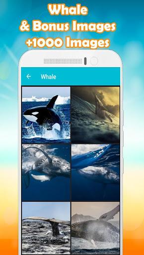 whale wallpaper hd 🐋 screenshot 1