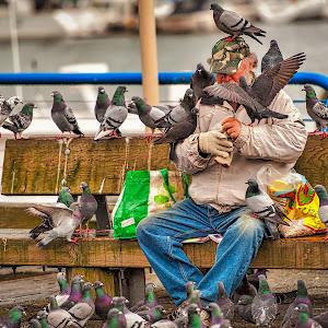 Bird Man of Granville.jpg