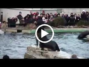 Video: austria, travel, zoological, zoo, garden, vienna, wien