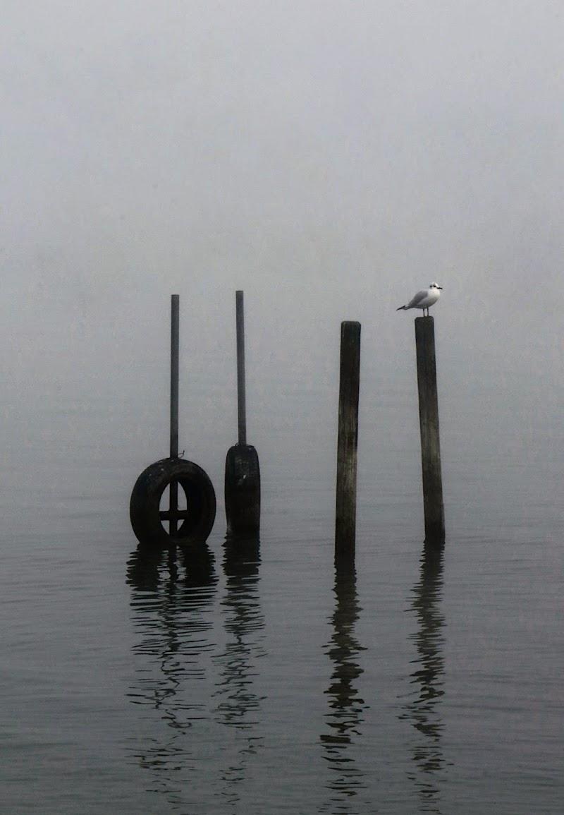 la solitudine...a volte una vera amica.... di Carla Roganti