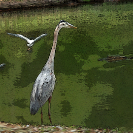 Bird is Watching by Edward Gold - Digital Art Animals ( digital photography, alligator, poster effect, bird watching alligator, green water, birds, digital art,  )