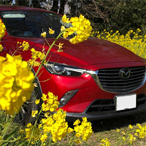 CX-3  のカスタム事例画像 すずちゃんさんの2020年03月30日00:00の投稿