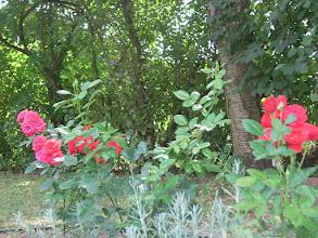 Photo: розы