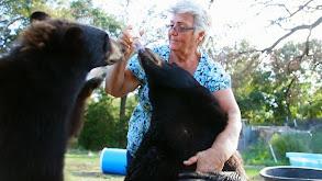 Three Big Cats and a Grandma thumbnail