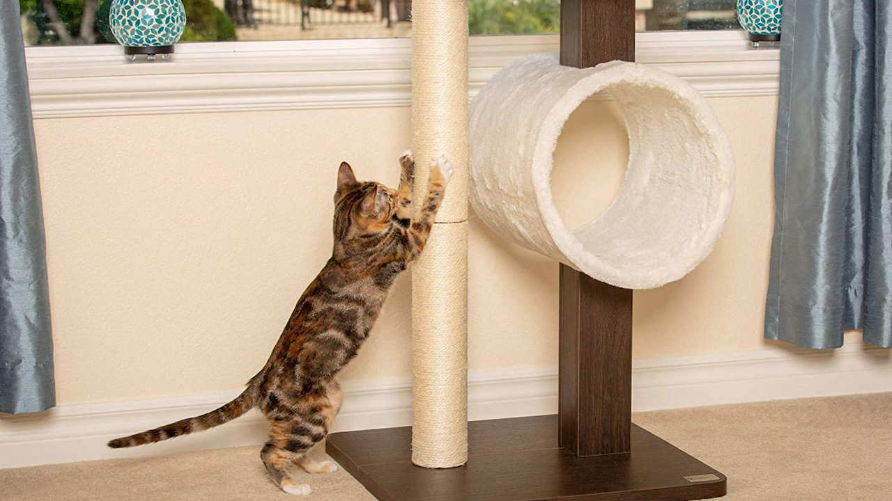 cat tree furniture for large cats