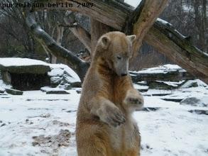 Photo: Knut schaut sich seine Tatzen genauer an ;-)