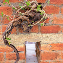 bonsai plant om a red bricks wall by Basant Malviya - Nature Up Close Other plants ( bonsai, nature, plant, wall )