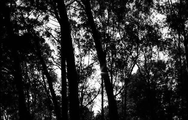 Uno spiraglio di luce tra gli alberi  di francescobilo