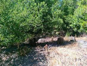 Photo: This was a eucalyptus grove less than 10 years ago.