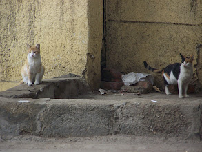 Photo: Cats, cats everywhere.