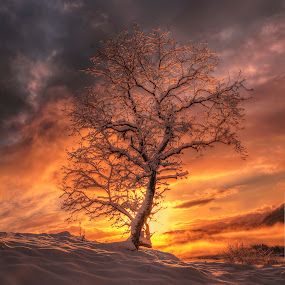 backlight by Rune Askeland - Landscapes Sunsets & Sunrises ( canon, winter, sky, tree, backlight, snow, sunrise,  )