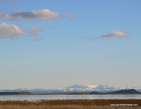 Photo: Tundra Swans and Snow Geese on Malheur Lake, Steens Mtn backdrop