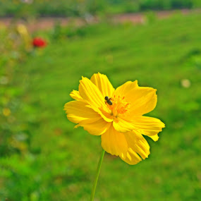Insect pollinated flower by Debraj Gupta - Flowers Single Flower ( random, pollination, insect, garden, flower )