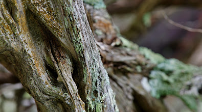 Photo: Weathered cedar