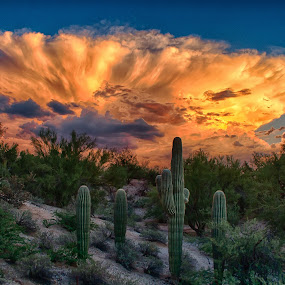 Monsoon at Sunset by Charlie Alolkoy - Landscapes Weather ( desert, monsoon, arizona, tucson, cloud, storm, cactus,  )