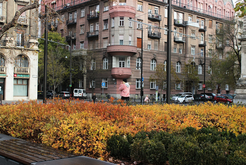 Rosa autunno  di giacfanciullacci