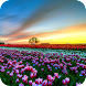 Flower Fields PRO Live Wallpaper