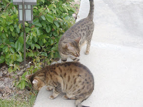 Photo: Both cats loved being outdoors...