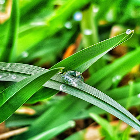 The world in a drop by Andreja Svenšek - Nature Up Close Natural Waterdrops ( water, up close, nature, grass, green, outdoors, outdoor, drops, droplets,  )