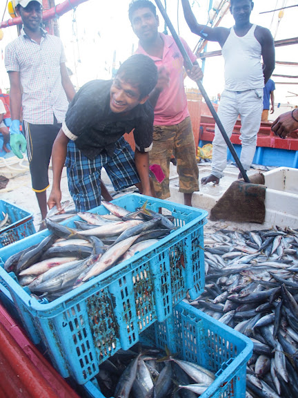 Chaos at Beruwala Fish Market