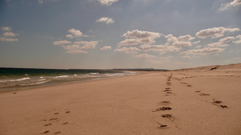 Ras al Hadd Beach - Oman di jeeg78