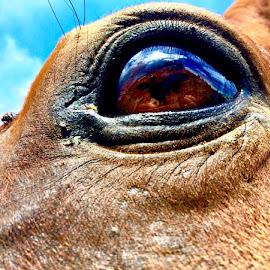 mos eye1 by MERA Photography - Novices Only Pets