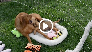 Video: Muzzle fight/find a comfy spot