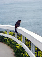 Photo: A cat in La Jolla looking for his lunch