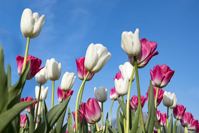 La primavera è nell'aria di Nefti-Monica