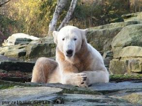 Photo: Knut nimmt seine Besucher unter die Lupe ;-)