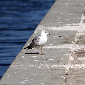 by Dawn Ayala - Animals Birds