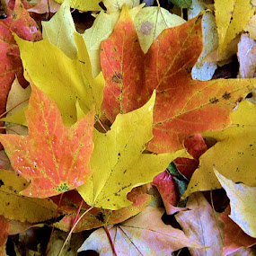 by Linda Brooks - Nature Up Close Leaves & Grasses (  )
