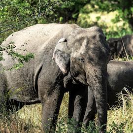 Aliya by Sasanka Gamage - Animals Other Mammals