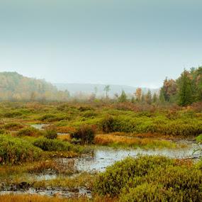 Fog on the bog by Dave Bradley - Landscapes Waterscapes ( foggy, waterscape, autumn, wetlands, autumn colors )