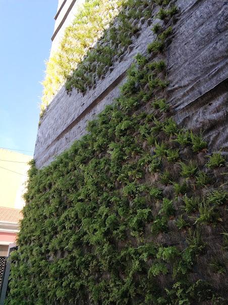 Plantación en el geotextil del jardín vertical de San Vicente del Raspeig